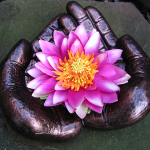 Lotusbloem - lotusbloemen
